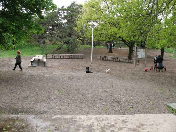 High Park Leash Free Dog Park
